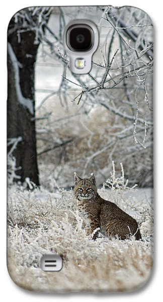 Bobcats Photographs Galaxy S4 Cases - Bobcat and Heavy Frost Galaxy S4 Case by Gary Langley