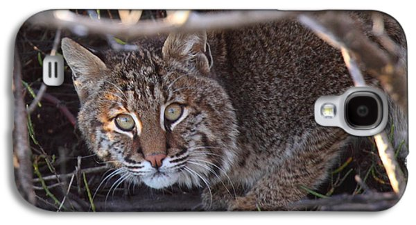 Bobcats Photographs Galaxy S4 Cases - Bobcat Galaxy S4 Case by Bruce J Robinson
