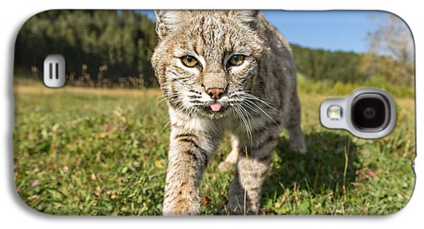 Bobcat Close Up Galaxy S4 Case by Jerry Fornarotto