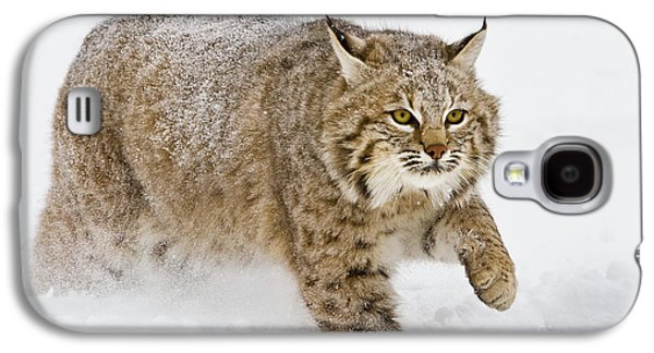 Bobcat In Snow Galaxy S4 Case by Jerry Fornarotto