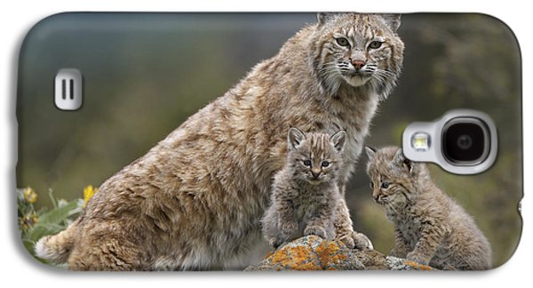 Bobcats Photographs Galaxy S4 Cases - Bobcat Mother And Kittens North America Galaxy S4 Case by Tim Fitzharris