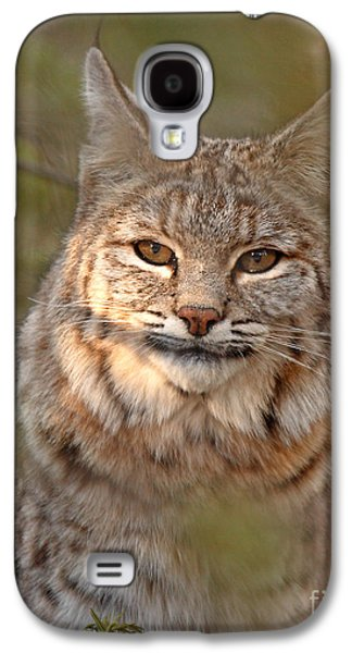 Bobcats Photographs Galaxy S4 Cases - Bobcat Portrait Surrounded By Pine Galaxy S4 Case by Max Allen