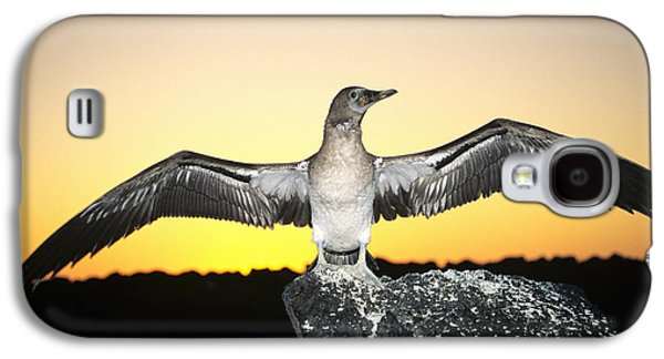 Booby At Sunset Galaxy S4 Case by Dave Fleetham - Printscapes