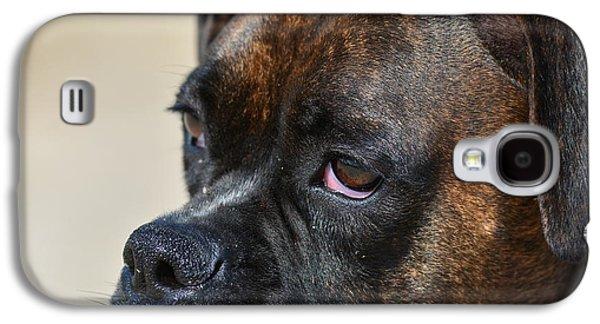 Boxer Galaxy S4 Cases - Boxer sad eyes Galaxy S4 Case by Jo-Ann  Matthews