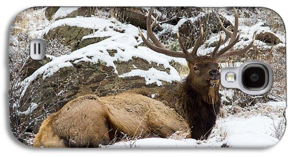 Bull Elk Lounging Galaxy S4 Case by Scott Nelson