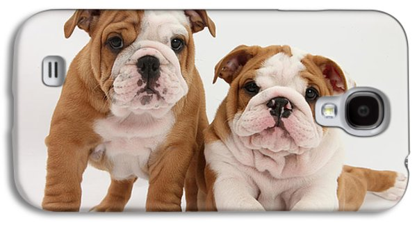 Domesticated Animals Galaxy S4 Cases - Bulldog Puppies Galaxy S4 Case by Mark Taylor