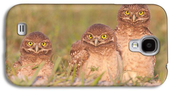 Three Chicks Galaxy S4 Cases - Burrowing Owl Siblings Galaxy S4 Case by Clarence Holmes