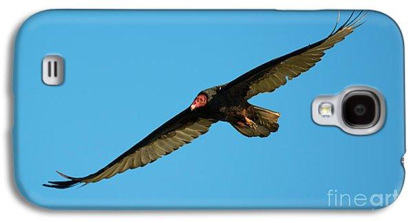 Buzzard Circling Galaxy S4 Case by Mike Dawson