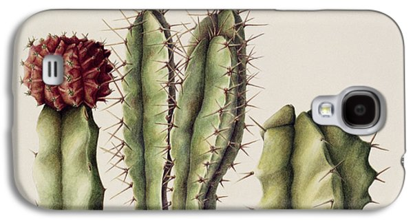 Cacti Galaxy S4 Case by Annabel Barrett