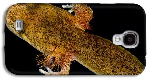 California Giant Salamander Larva Galaxy S4 Case by Dant� Fenolio