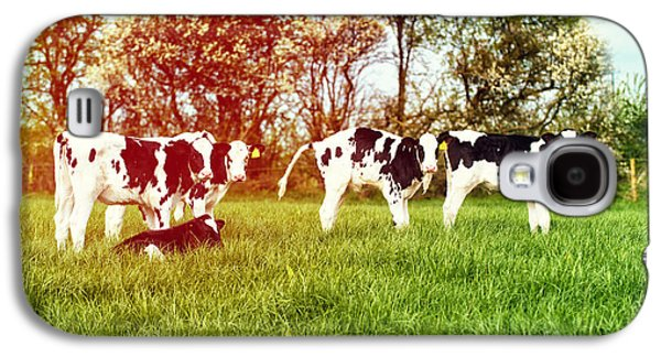 Farming Galaxy S4 Cases - Calves In Spring Field Galaxy S4 Case by Amanda And Christopher Elwell