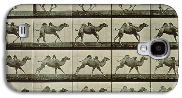 Camel Galaxy S4 Case by Eadweard Muybridge