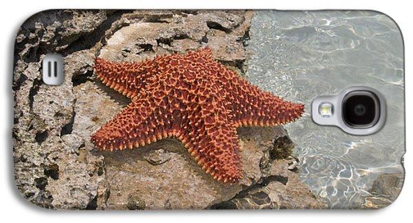 Caribbean Starfish Galaxy S4 Case by Betsy C Knapp