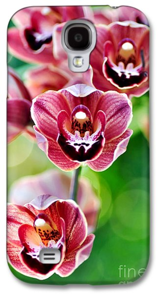 Cascading Miniature Orchids Galaxy S4 Case by Kaye Menner