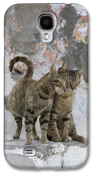 Gray Tabby Galaxy S4 Cases - Cat And Her Kitten Galaxy S4 Case by Jean-Louis Klein & Marie-Luce Hubert