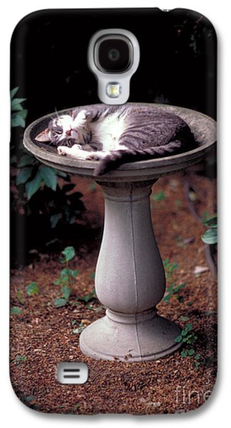 Gray Tabby Galaxy S4 Cases - Cat Asleep In A Birdbath Galaxy S4 Case by John Kaprielian