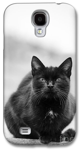 Pyrography Galaxy S4 Cases - Cat Galaxy S4 Case by Jelena Jovanovic