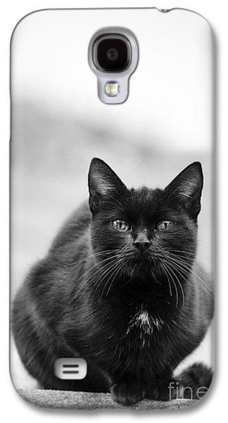 Animal Pyrography Galaxy S4 Cases - Cat Galaxy S4 Case by Jelena Jovanovic