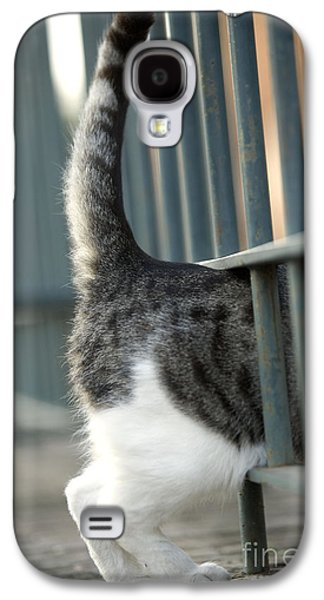 Gray Tabby Galaxy S4 Cases - Cat Walking Through Fence Galaxy S4 Case by Jean-Michel Labat