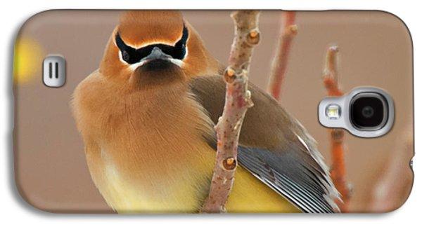 Cedar Wax Wing Galaxy S4 Case by Carl Shaw
