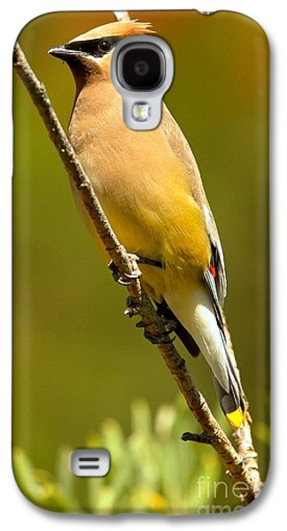 Cedar Waxwing Galaxy S4 Case by Adam Jewell