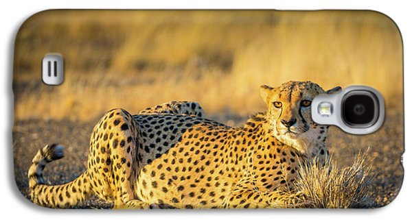 Cheetah Portrait Galaxy S4 Case by Inge Johnsson