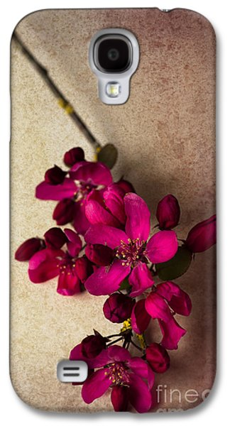 Cherry Blossoms Photographs Galaxy S4 Cases - Cherry Pie Galaxy S4 Case by Jan Bickerton