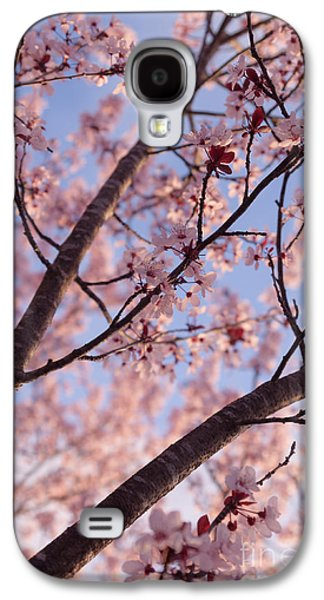 Cherry Blossoms Galaxy S4 Cases - Cherry Tree in Bloom Galaxy S4 Case by Ana V  Ramirez