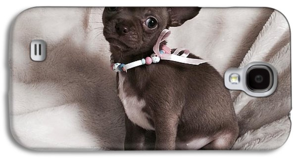 Puppies Galaxy S4 Cases - Chocolate Chihuahua  Galaxy S4 Case by Susan Crowley