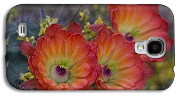 Botanical Galaxy S4 Cases - Claret Cup Cactus - Three of a Kind  Galaxy S4 Case by Saija  Lehtonen