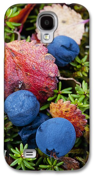Harts Galaxy S4 Cases - Close Up Of Blueberries Amongst Fall Galaxy S4 Case by Cathy Hart