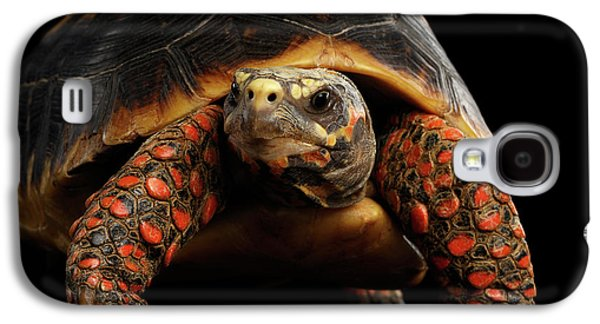 Close-up Of Red-footed Tortoises, Chelonoidis Carbonaria, Isolated Black Background Galaxy S4 Case by Sergey Taran