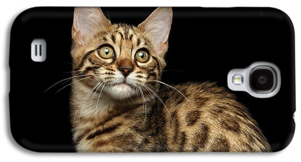 Closeup Bengal Kitty On Isolated Black Background Galaxy S4 Case by Sergey Taran