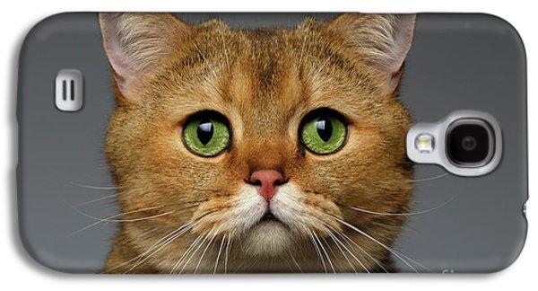 Closeup Golden British Cat With  Green Eyes On Gray Galaxy S4 Case by Sergey Taran