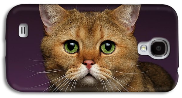 Closeup Golden British Cat With  Green Eyes On Purple  Galaxy S4 Case by Sergey Taran