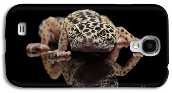 Closeup Leopard Gecko Eublepharis Macularius Isolated On Black Background, Front View Galaxy S4 Case by Sergey Taran