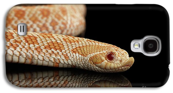 Closeup Pink Pastel Albino Western Hognose Snake, Heterodon Nasicus Isolated On Black Background Galaxy S4 Case by Sergey Taran