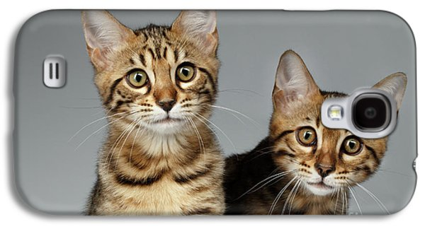 Closeup Portrait Of Two Bengal Kitten On White Background Galaxy S4 Case by Sergey Taran