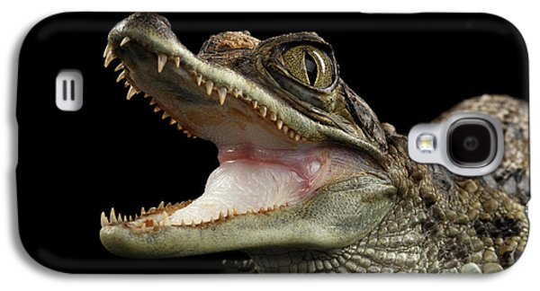 Closeup Young Cayman Crocodile, Reptile With Opened Mouth Isolated On Black Background Galaxy S4 Case by Sergey Taran
