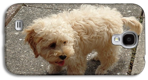 Puppies Galaxy S4 Cases - Cockapoo on patio Galaxy S4 Case by Anthony Mears