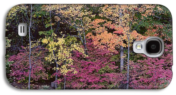Colorful Fall Foliage Galaxy S4 Case by Rona Black