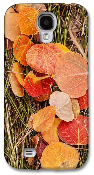 Ground Level Galaxy S4 Cases - Colorful Fallen aspen leaves during autumn Galaxy S4 Case by Vishwanath Bhat