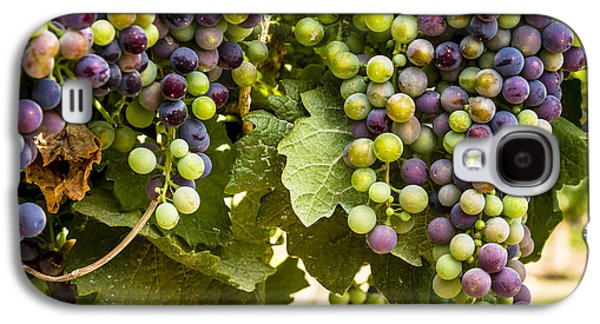 Colorful Red Wine Grape Galaxy S4 Case by Teri Virbickis