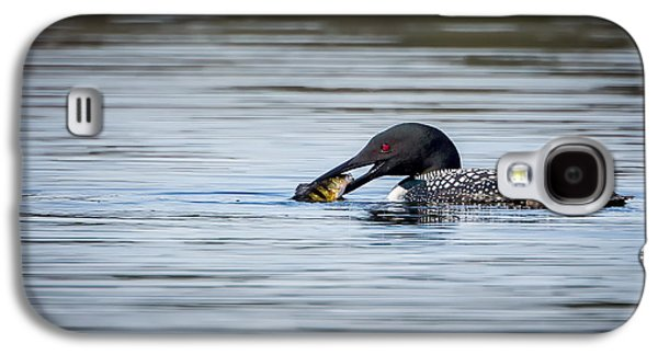 Loon Galaxy S4 Cases - Common Loon Galaxy S4 Case by Bill Wakeley