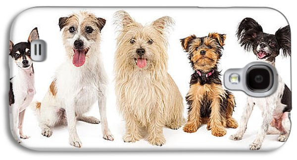 Studio Photographs Galaxy S4 Cases - Common Small Breed Dogs Galaxy S4 Case by Susan  Schmitz