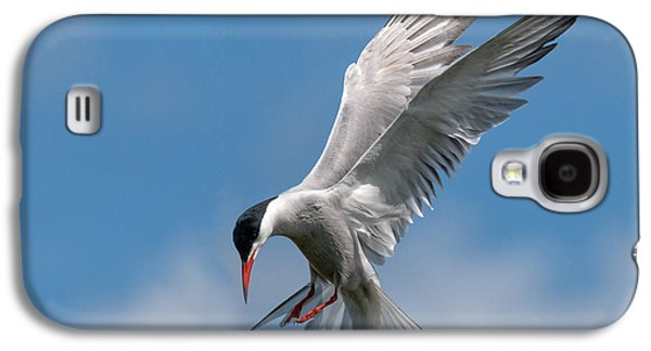 Hovering Galaxy S4 Cases - Common Tern  Galaxy S4 Case by Ian Hufton