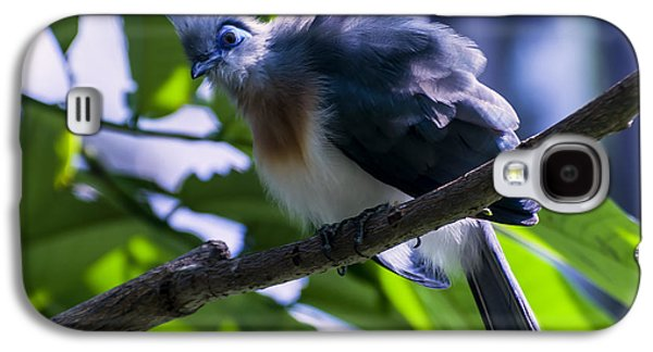 Crest Digital Art Galaxy S4 Cases - Crested Coua Galaxy S4 Case by Chris Flees