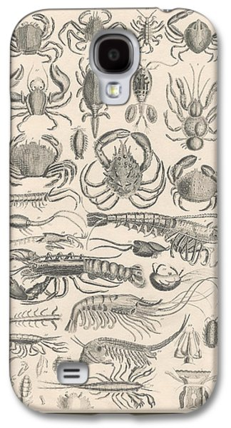 Botanical Galaxy S4 Cases - Crustacea Galaxy S4 Case by Captn Brown