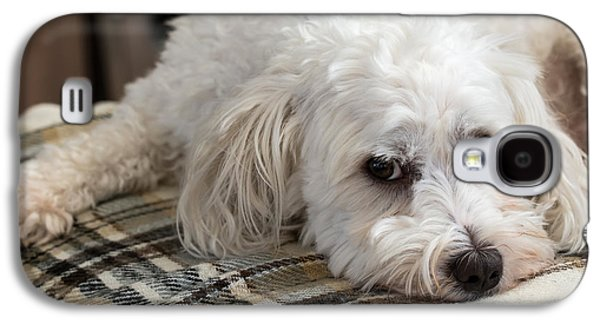 Puppies Galaxy S4 Cases - Cute maltezer dog laying on carpet Galaxy S4 Case by Davey Poppe