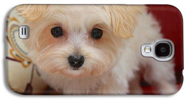 Puppies Galaxy S4 Cases - Cute Maltipoo Galaxy S4 Case by Carol Groenen